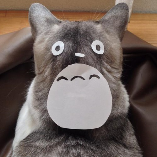cartoon memes my neighbor totoro cats