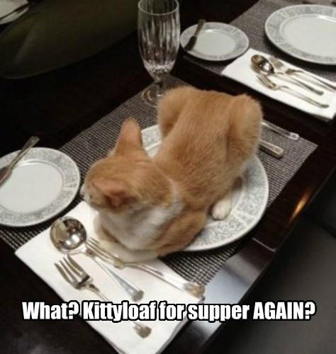 captions cute kitty - 8507408128