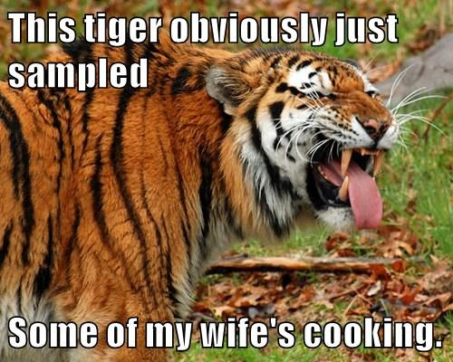 animals tiger caption funny - 8507453952