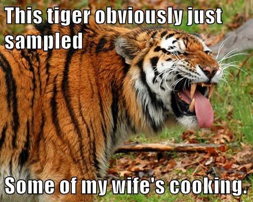 animals tiger caption funny - 8507453952