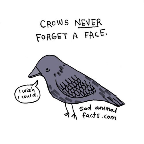 Bird - CROWS NEVER FORGET A FACE. wish could Sad animai facts.com