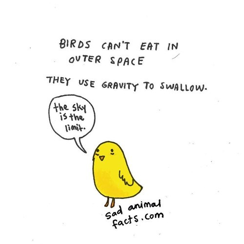 Text - BIRDS CAN'T EAT IN OVTER SPACE THEY USE GRAVITY To SWALLOW. the sky is the Sad animal facts.Com