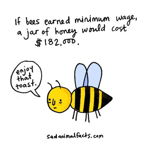 Honeybee - f bees earned minimum wage, a jar of honey would cost 182,ouD enjoy that toast Sadanimalfacts.com