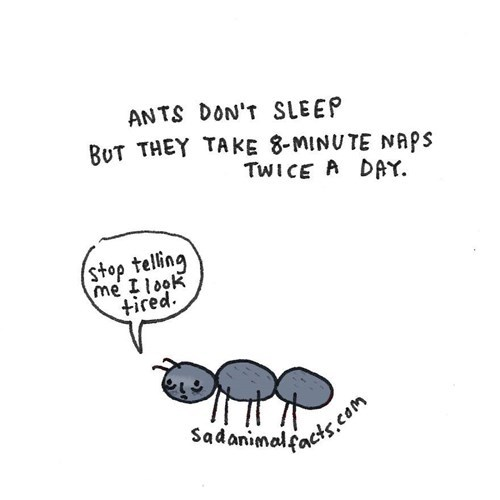 Text - ANTS DON'T SLEEP BUT THEY TAKKE 8-MINUTE NAPS TWICE A DAY. stop telling me Ilook tired Sadanimals.com