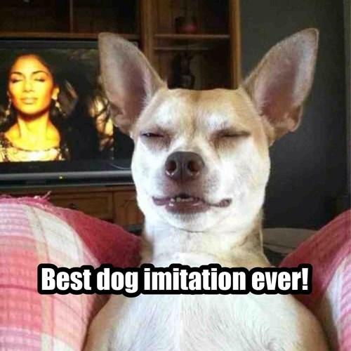 Mammal - Best dog imitation ever!