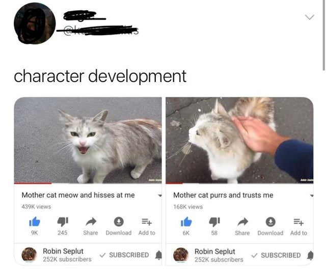 youtube videos that follow blooming friendship between human and mother cat