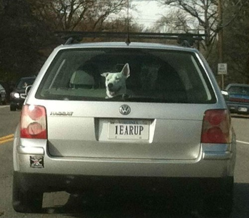 cute dogs vanity plate Now That Is a Deserved Vanity Plate