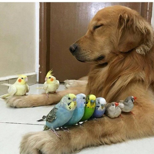 cute dogs birds Just Close Your Eyes and Maybe They'll Go Away