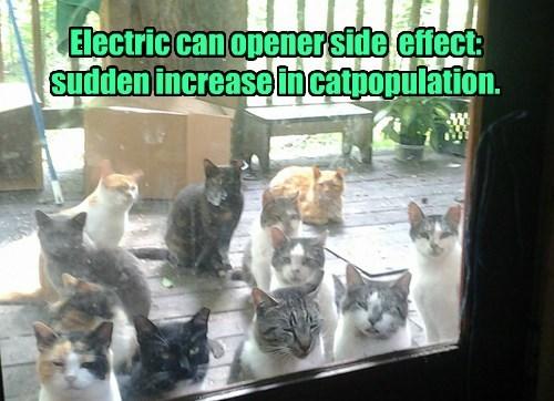 captions Cats funny - 8507848192
