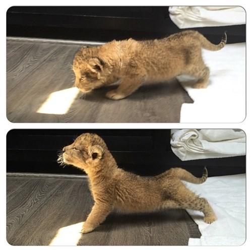 cute kitten image Morning Yoga