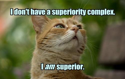 captions Cats funny - 8508065792