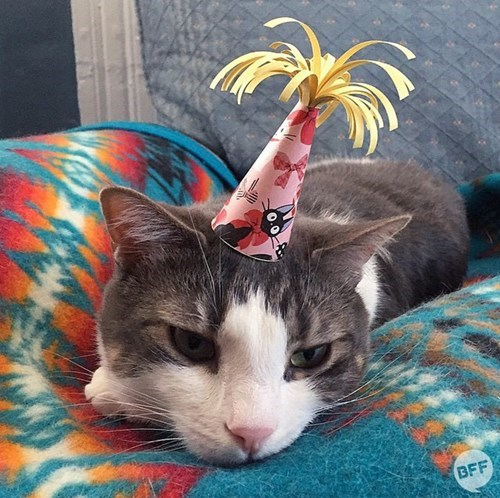 cute cats dogs Birthday Cat VS Party Pup