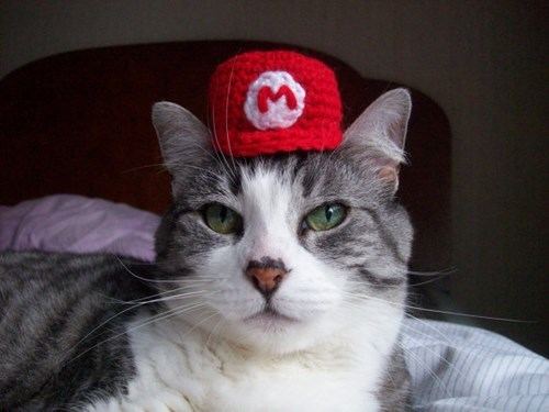 cute cats dogs Mario VS Luigi