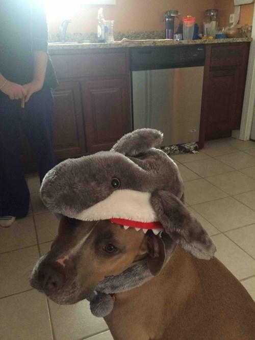 cute dogs cats Dogoshark VS Sharktopuss