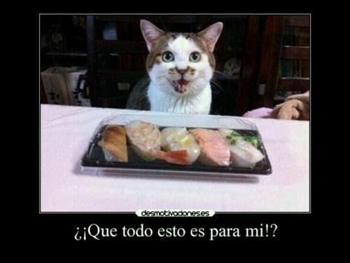 gatos bromas Memes animales - 8508484608