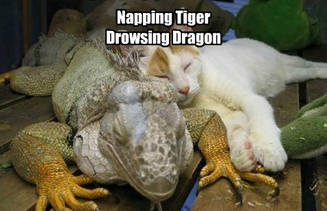 captions,lizard,Cats,funny
