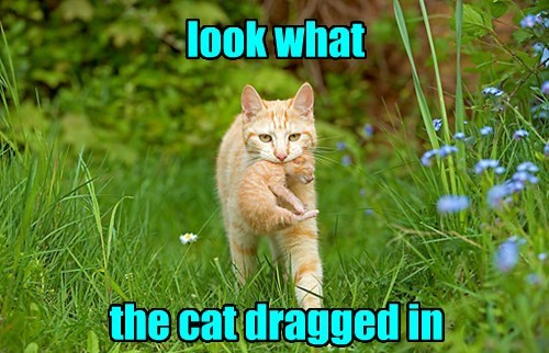 captions puns Cats funny - 8508840448