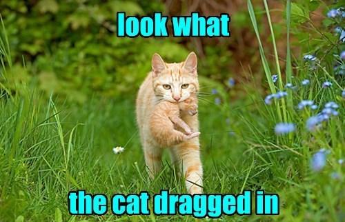 captions puns Cats funny - 8508840448