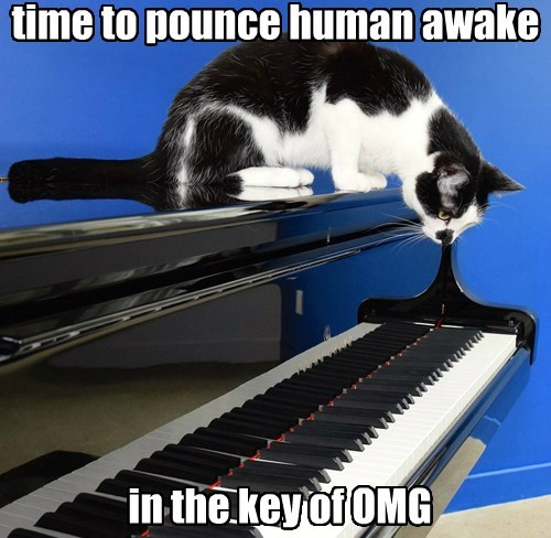 captions Cats funny - 8508844288