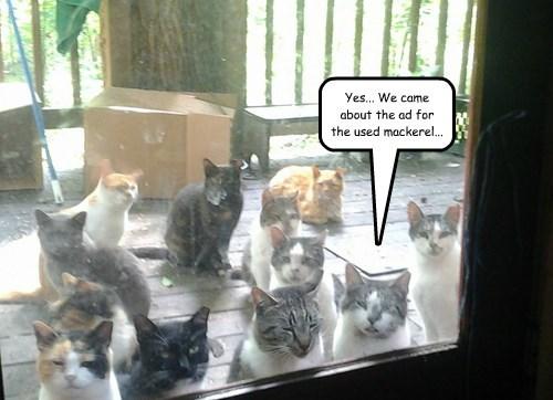 captions Cats funny - 8509449472