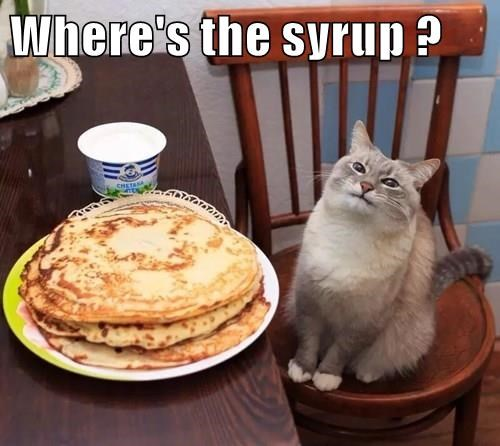captions,pancakes,Cats,funny