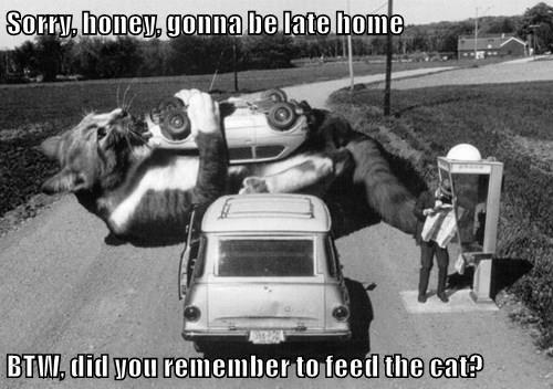 animals captions Cats funny - 8509555456