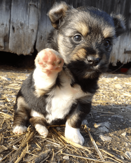 cute puppy image Wave to the Camera!