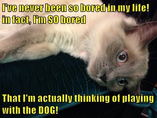 animals captions Cats funny - 8509692928