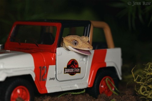 funny gecko Jurassic park Welcome to Jurassic Park
