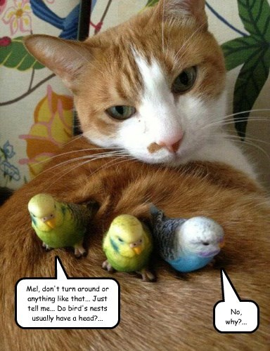 birds captions Cats funny - 8509830912
