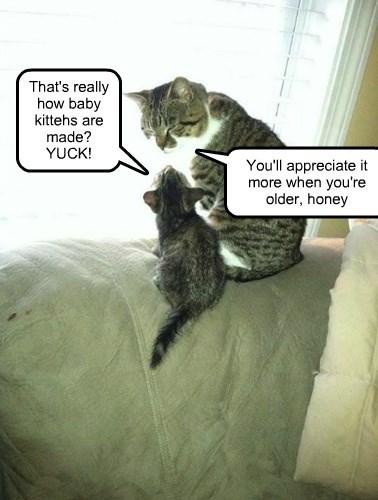 captions Cats funny - 8510024192