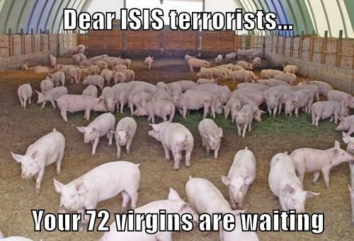 Dear ISIS terrorists...  Your 72 virgins are waiting