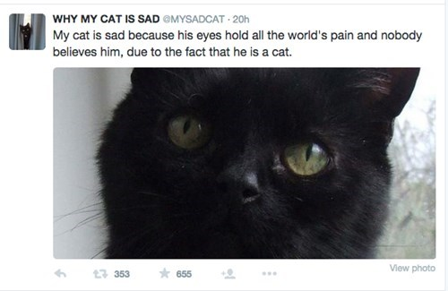 funny twitter cats This Cat Is Sad and It's Reasons Are Endless