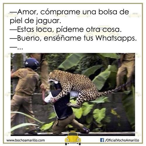 el whatsapp no