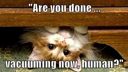 animals captions Cats funny - 8510318080
