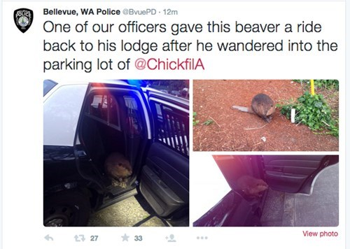 funny beaver police Maybe He Just Wanted Some Waffle Fries?