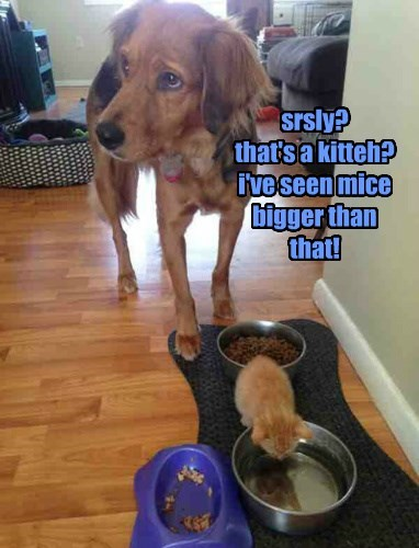 srsly? that's a kitteh? i've seen mice bigger than that!