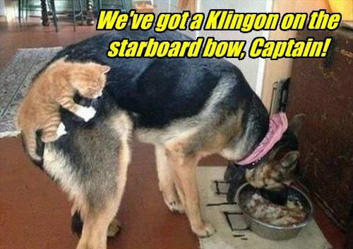 dogs captions Star Trek Cats funny - 8510680064