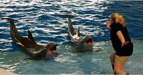 funny dolphin jurassic world Clever Girls