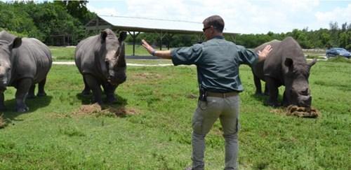 funny rhinoceros jurassic world These Rhinoceraptors Are Large Enough