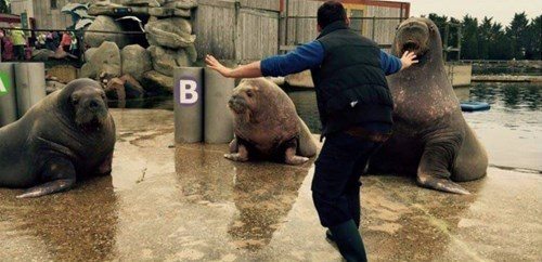 funny walrus jurassic world Watch Out for Those Six Inch Non-Retractable Tusks