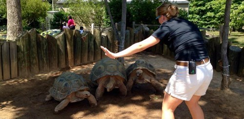 funny tortoise jurassic world the-speed-of-these-beasts-is-incredible