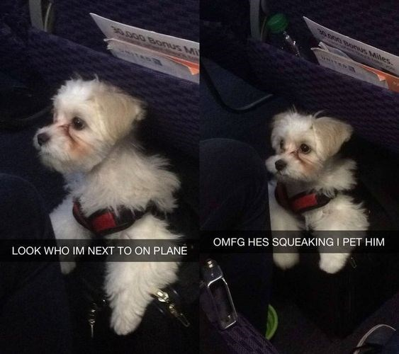 aww pups dogs flight cute surprise - 8511237