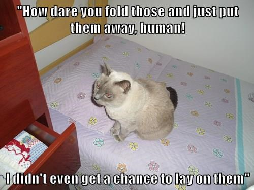 animals captions Cats funny - 8511323648