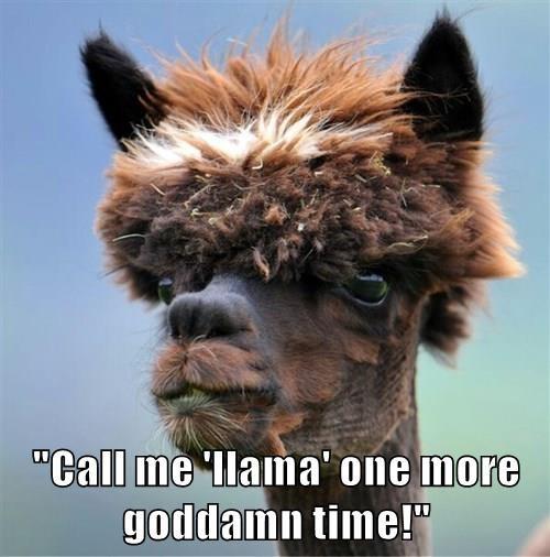 """Call me 'llama' one more goddamn time!"""