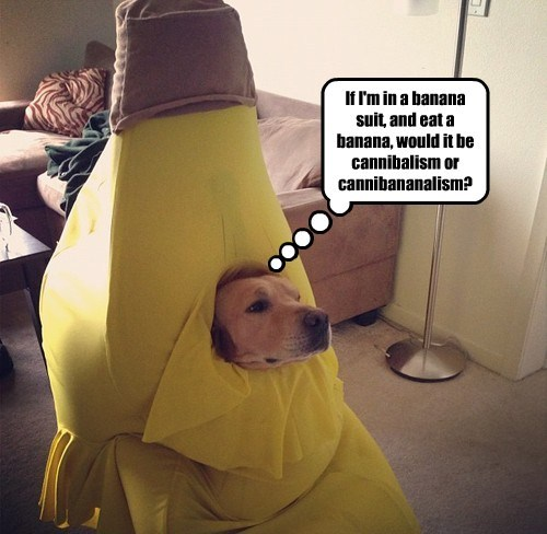 dogs captions funny - 8511530240