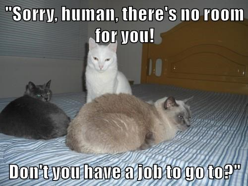 animals captions Cats funny - 8511667712