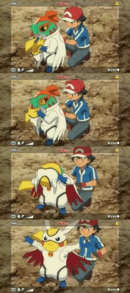 hawlucha anime pikachu - 8511789312