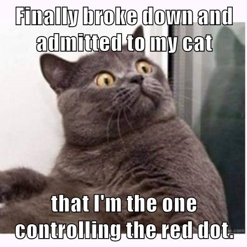 animals captions Cats funny - 8511943424