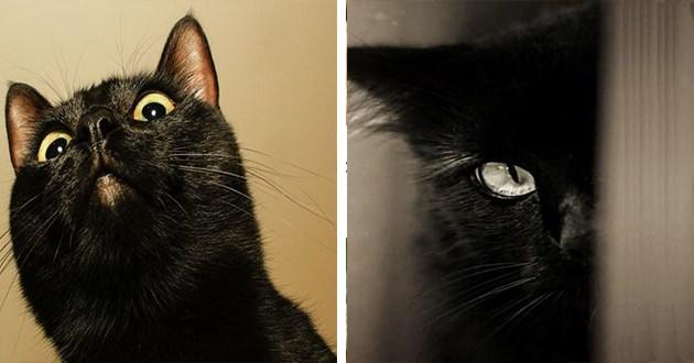 aww black cats Cats black beautiful black cat - 8512773